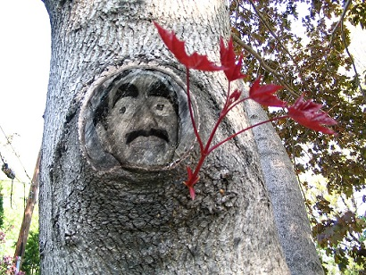 Groucho In a Tree