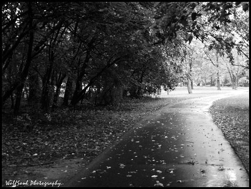 """My new path"" by WolfS♡ul"